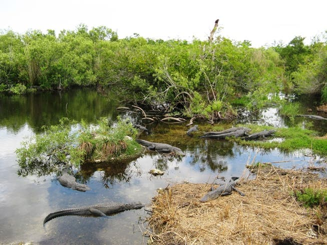 Water in Everglades