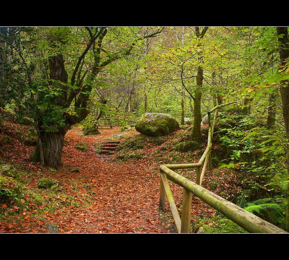 Bosque en Infiesto