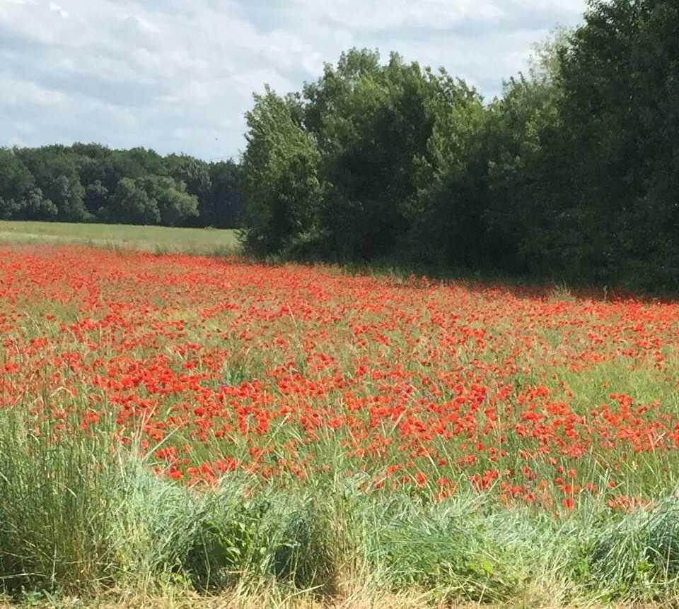 Campo em La Chapelle-sur-Loire