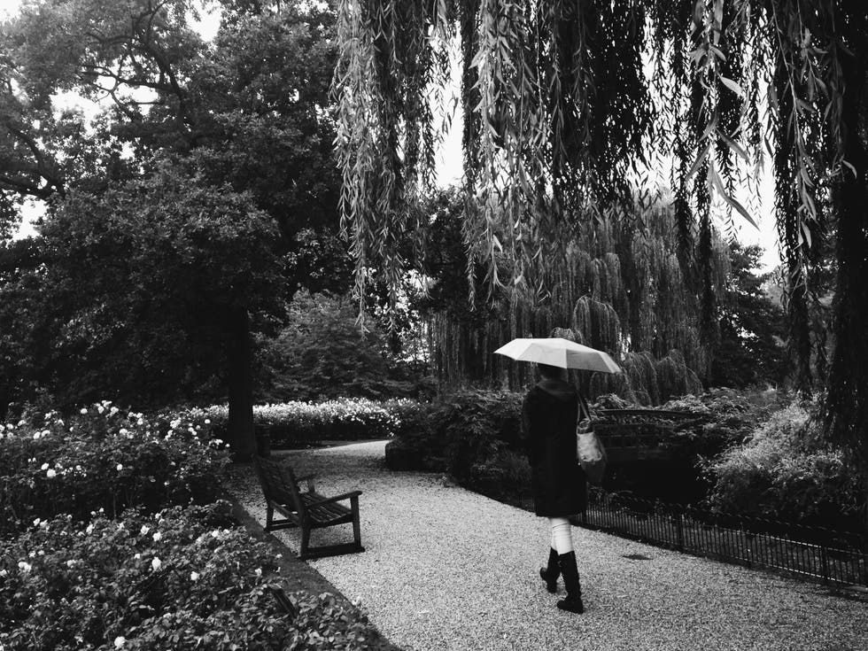 Blanco y negro en Queen Mary's Gardens