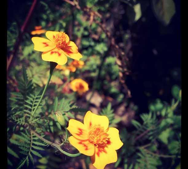 Flor en Santiago de Querétaro