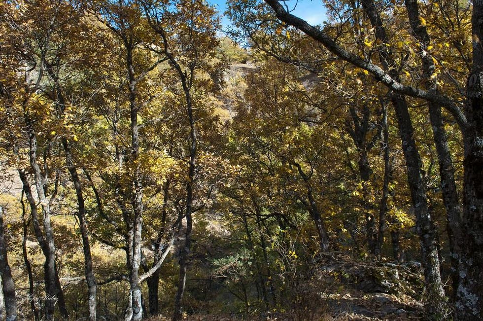 Temperate Broadleaf And Mixed Forest in Lobras