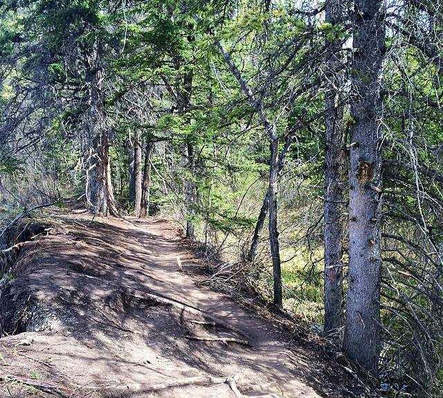 Sendero en Fish Creek Provincial Park