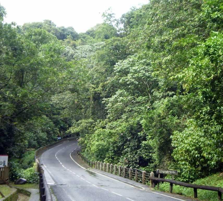 Calle en Parc National de la Guadeloupe