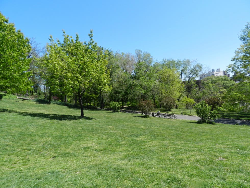 Pradera en Morningside Park