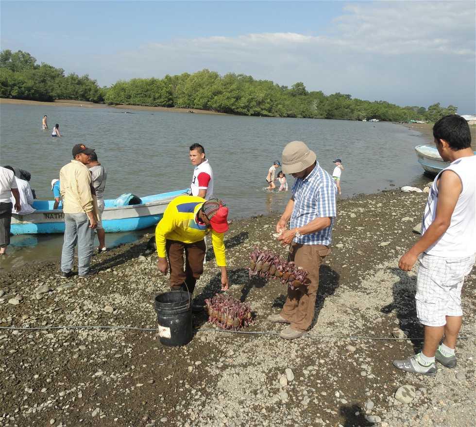 Llanura de marea en Puerto Jeli
