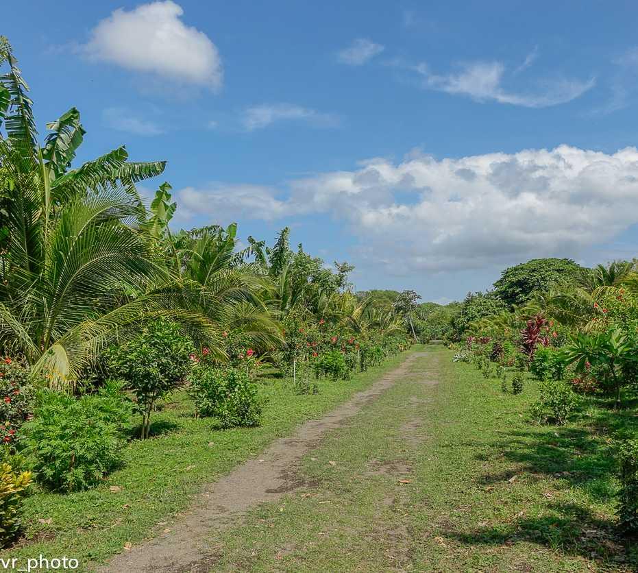 Vegetación en Reserva Natural Charco Verde