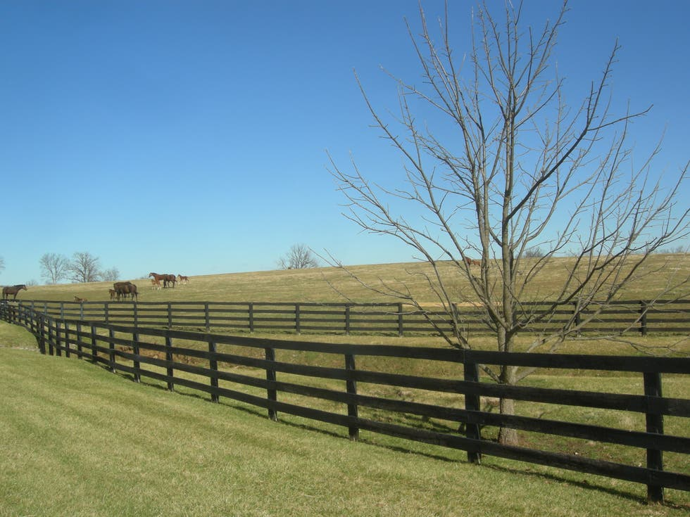 Árbol en Kentucky Bluegrass