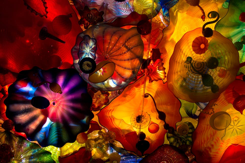 Rojo en Chihuly Garden and Glass