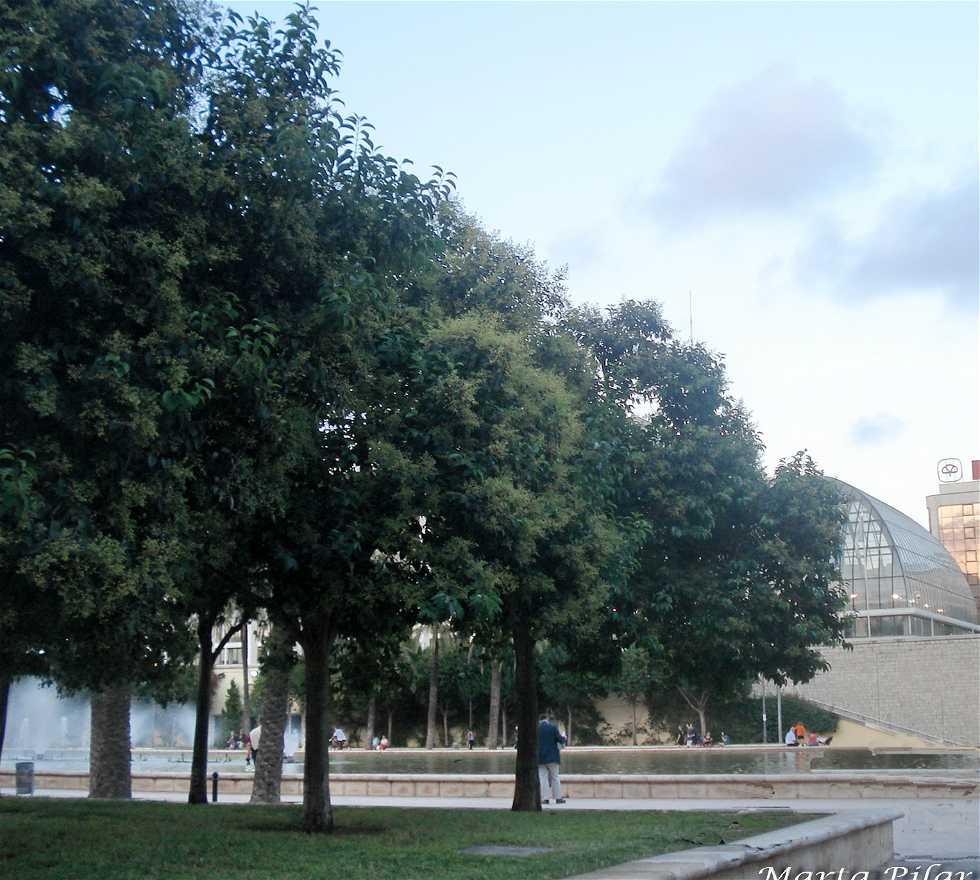 Árbol en Palau de la Música