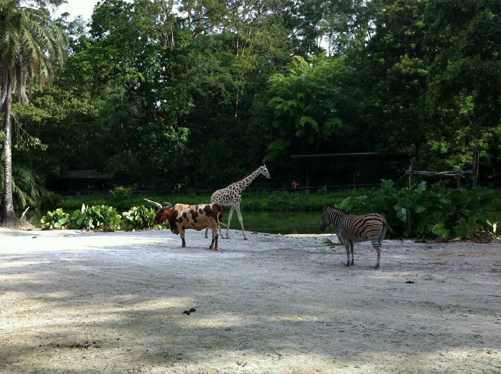 Zoo en Taiping Lake Gardens